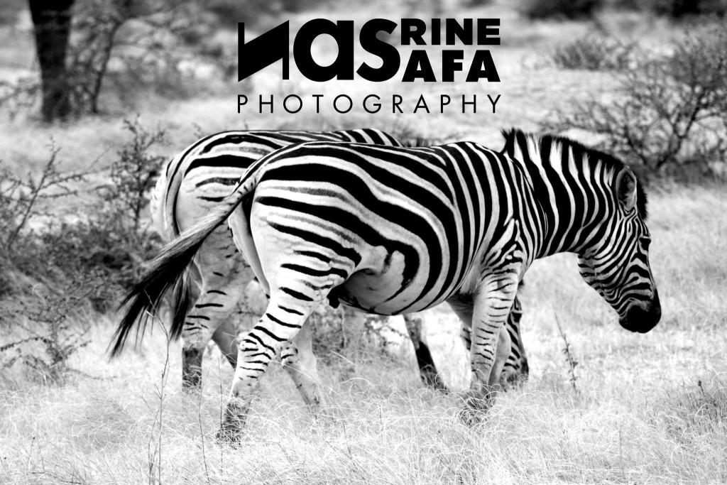 photo Nasrine Safa